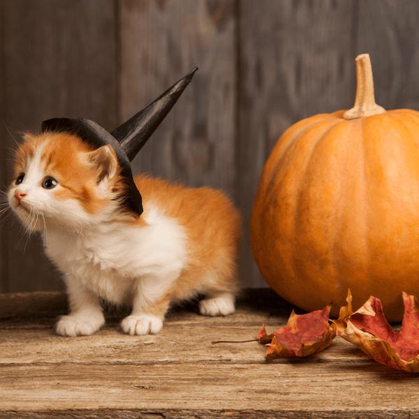 Halloween körkép az egészség jegyében